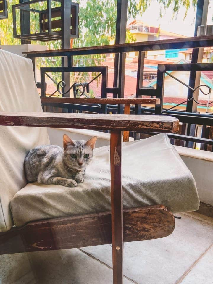 Grey cat sitting on chair on a balcony
